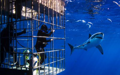 The Teams Go Cage Shark Diving!